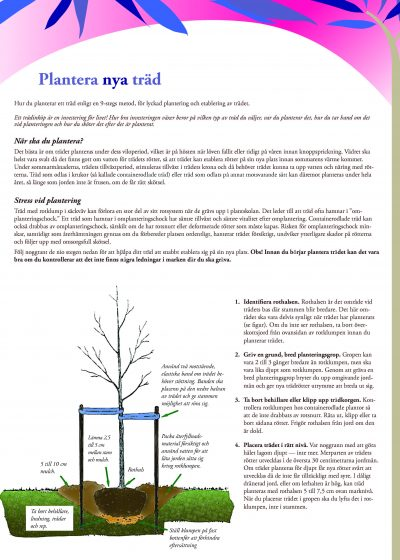 Plantera nya träd