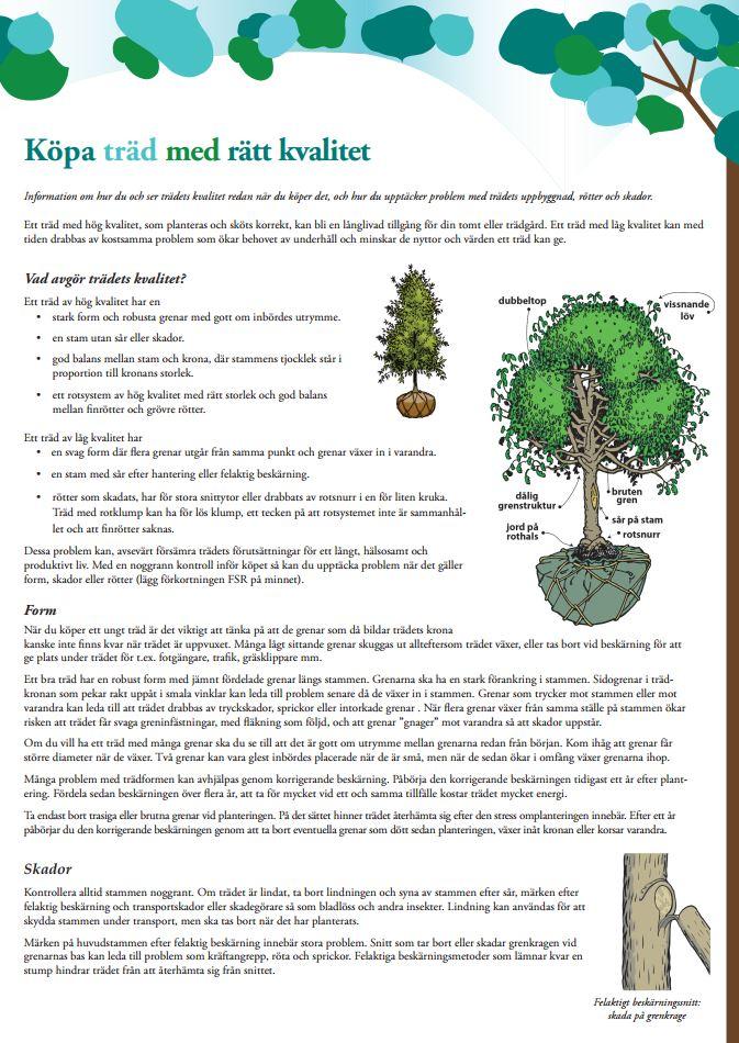 Köpa träd med rätt kvalitet