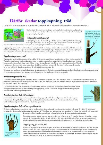 Därför skadar toppkapning träd
