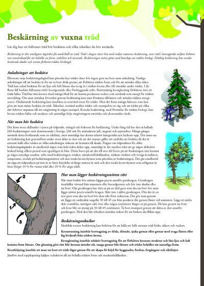 Beskärning av vuxna träd