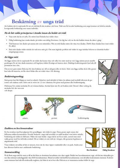 Beskärning av unga träd